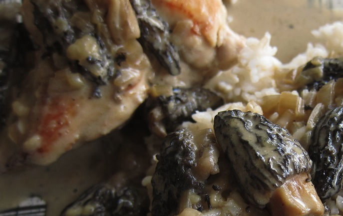 Chicken with Morel Cream Sauce. Yes—the morels are the star.