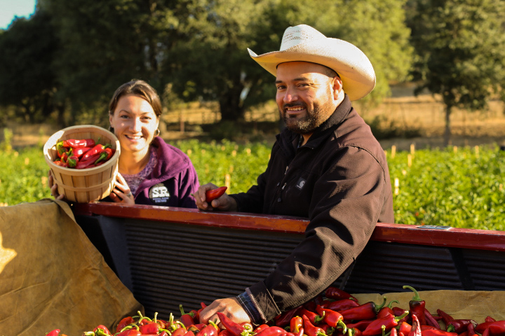 Kendra and Nacho (the farmer) harvesting the piments in Boonville, California.