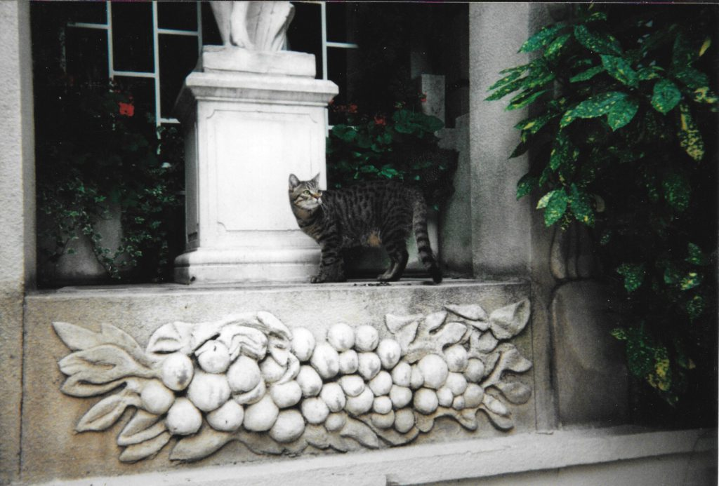 "The cat in the courtyard at the Ritz. We named him ""Ritz Crackers."""